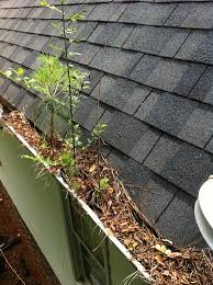 leaves and weeding gutter